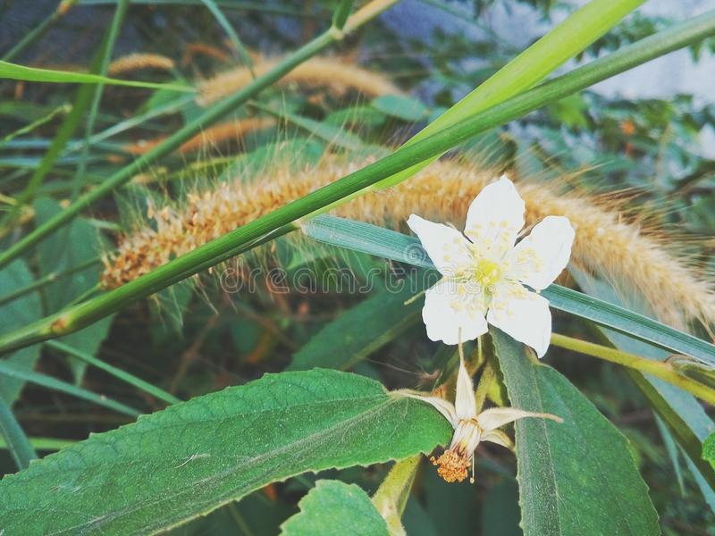 Floración de la mañana imágenes de archivo libres de regalías