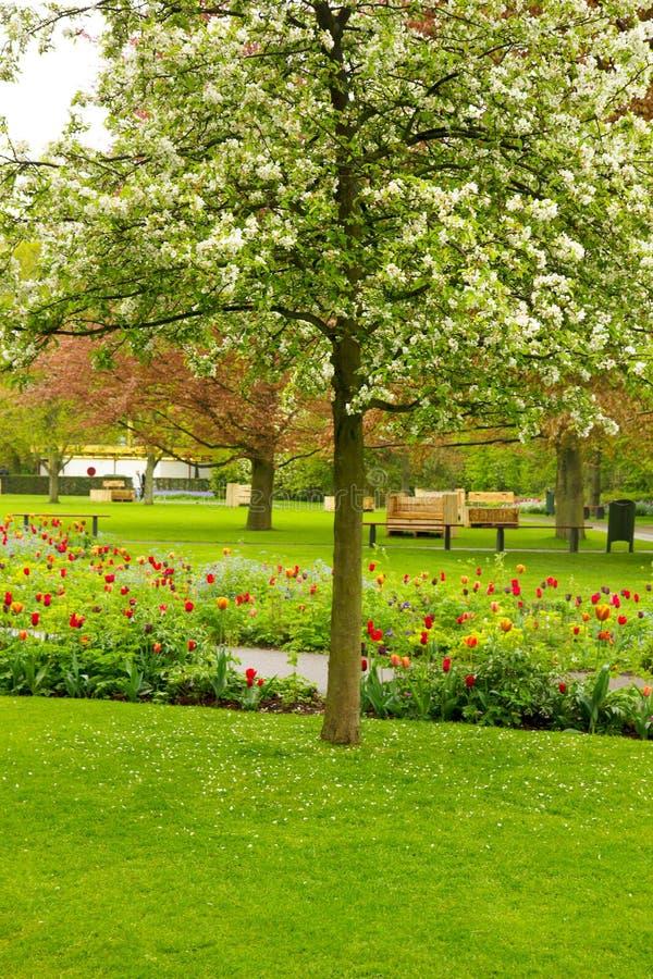 Floración de la primavera   árbol en un jardín fotos de archivo