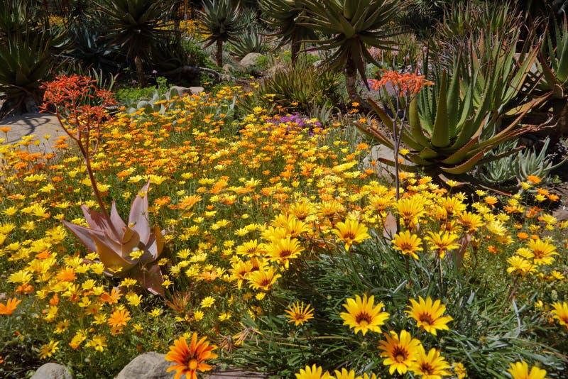 Floración de la primavera en California en los jardines botánicos de Taft, Ojai C fotografía de archivo