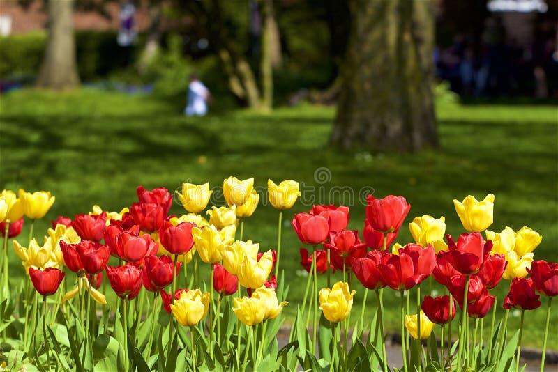 Floración de la primavera en Inglaterra foto de archivo libre de regalías