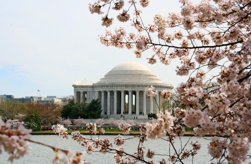 Floración de los cerezos con Jefferson Memorial fotografía de archivo libre de regalías