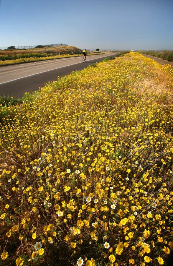 Floración del Bicyclist y del resorte imagen de archivo libre de regalías
