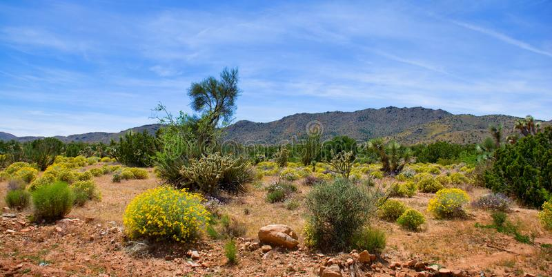 Floración del desierto de la primavera en Arizona fotografía de archivo libre de regalías
