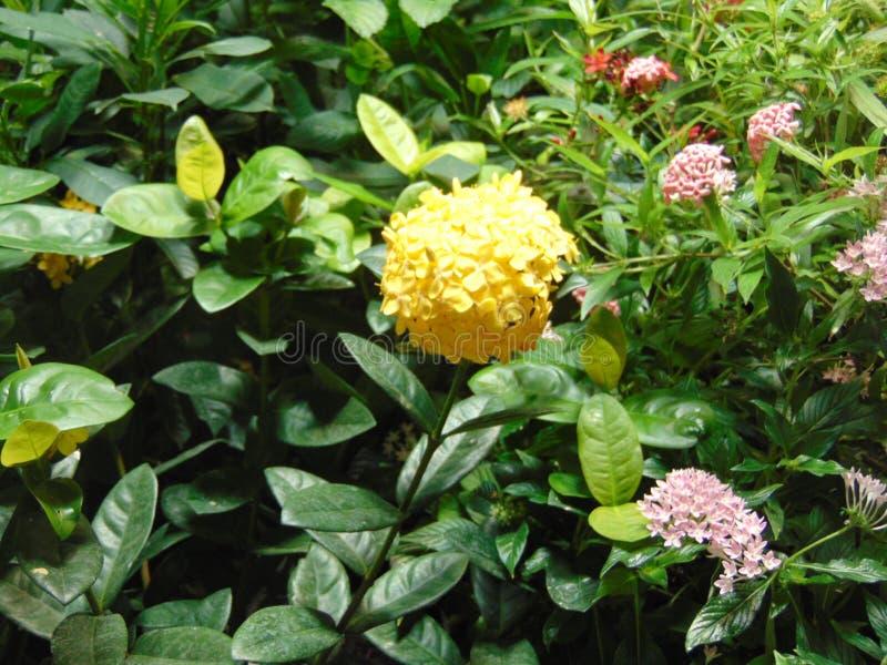 Floración en la ciudad foto de archivo libre de regalías