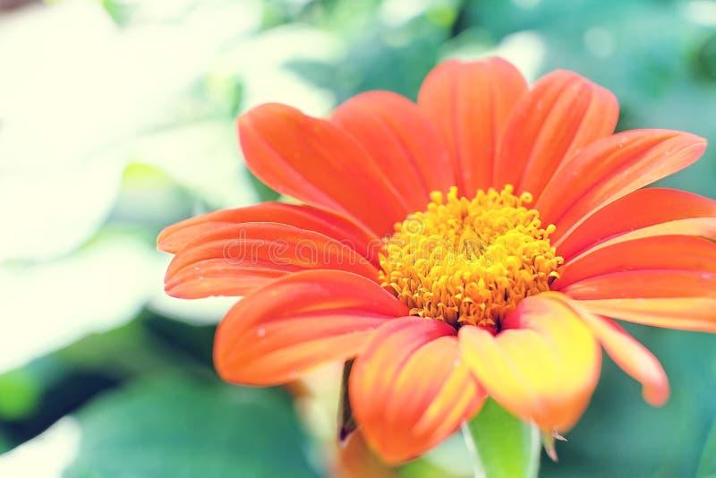 Floración en una tarde soleada fotografía de archivo