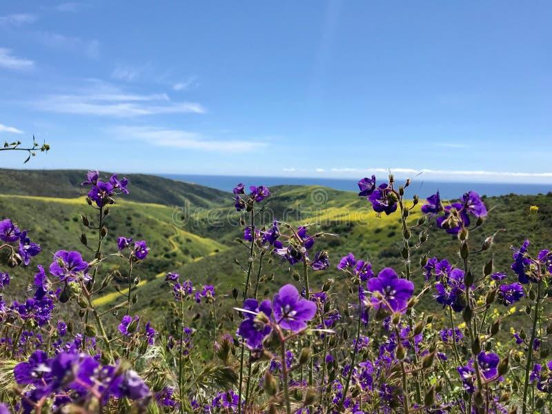 Floración estupenda de las flores de fiesta fotografía de archivo
