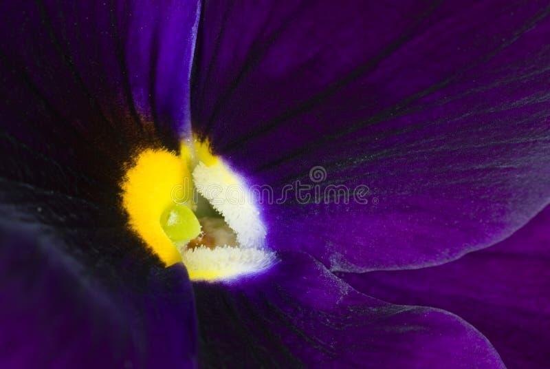 Floración púrpura de la flor imagenes de archivo