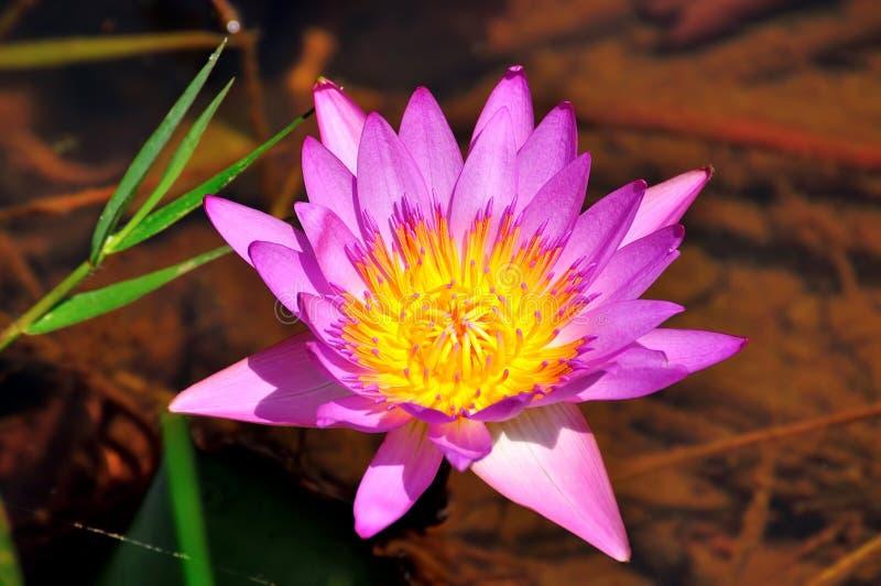 Floración perfecta imagen de archivo
