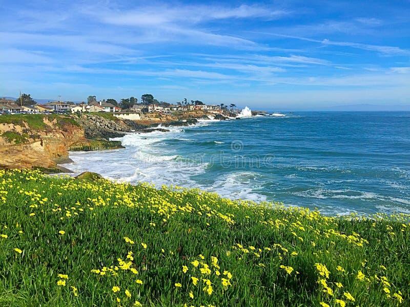 Floración por el océano imagen de archivo