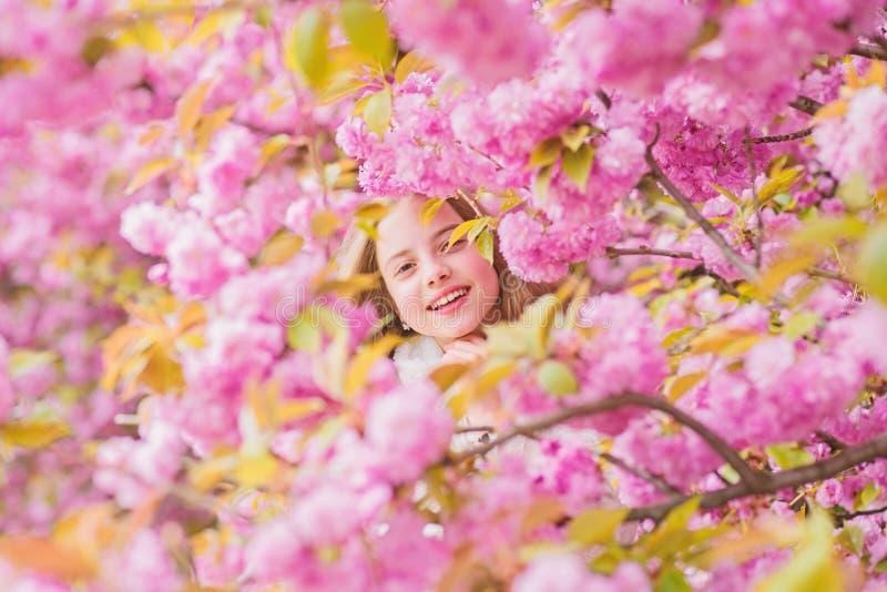 Floraci?n blanda Ni?o en las flores rosadas del fondo del ?rbol de Sakura Concepto de la bot?nica Muchacha que goza de la flor de imagenes de archivo