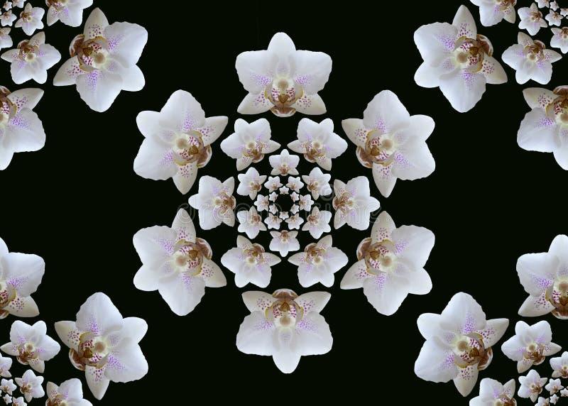 Floraciones blancas de la orquídea Imagen inconsútil imágenes de archivo libres de regalías