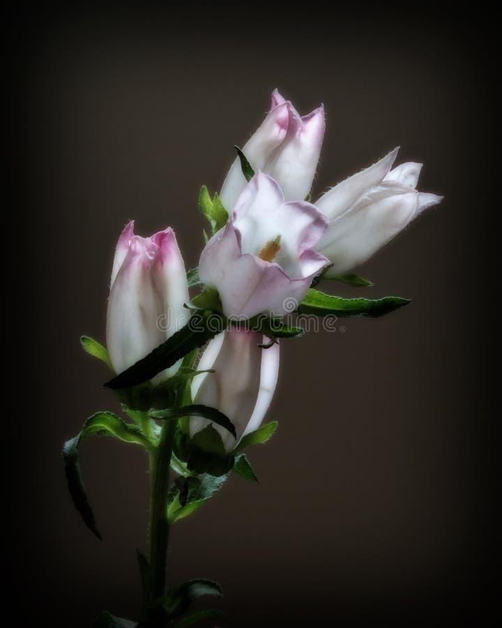 Floraciones de la flor imagenes de archivo
