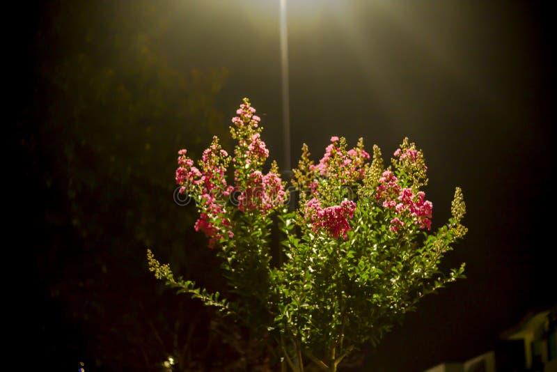 Floraciones del árbol imagen de archivo libre de regalías
