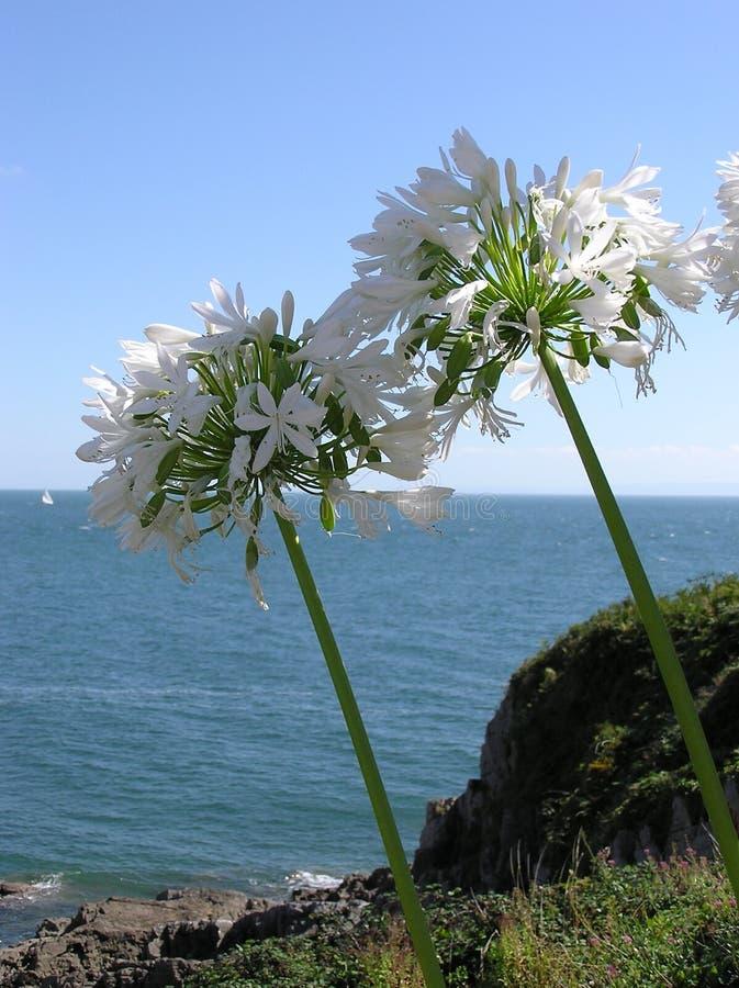 Floraciones del océano fotos de archivo