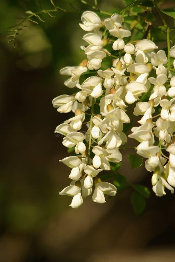 Floraciones del tiempo de verano foto de archivo