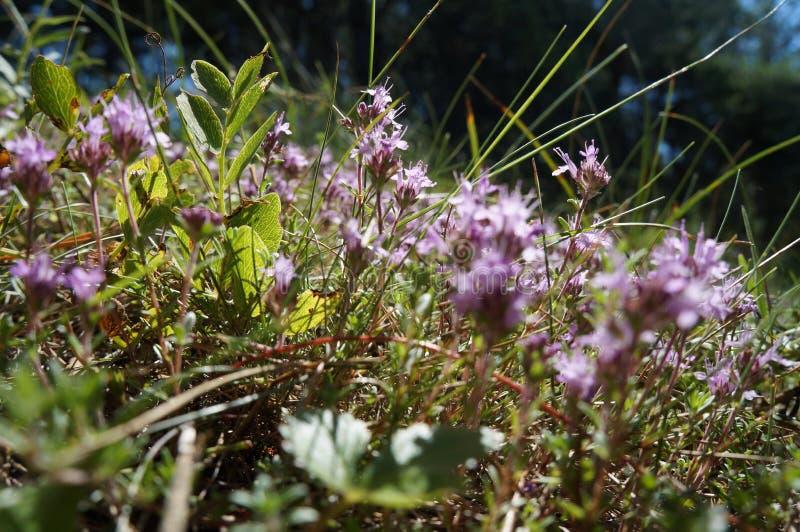 Floraciones en musgo foto de archivo libre de regalías