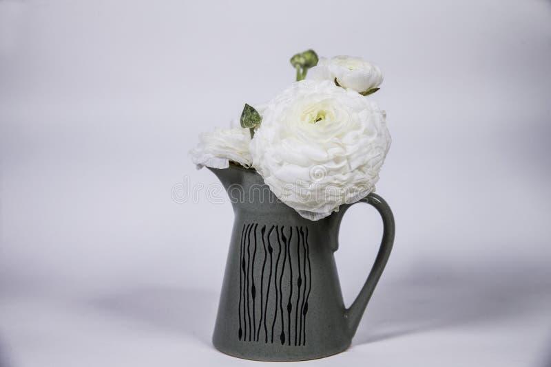 Floraciones hermosas de una flor blanca fotos de archivo libres de regalías