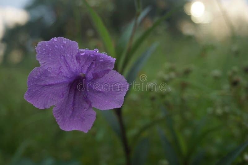 Floradröm arkivfoto