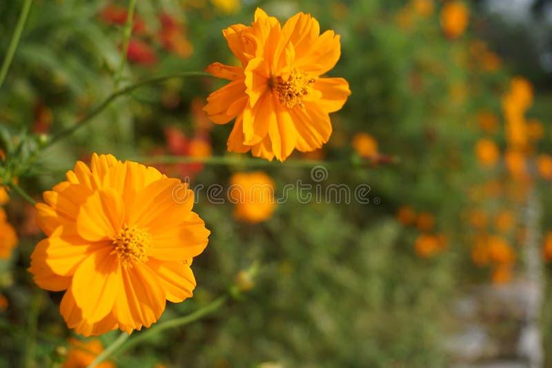 Floradröm Härlig perfekt skönhetsfel royaltyfri foto