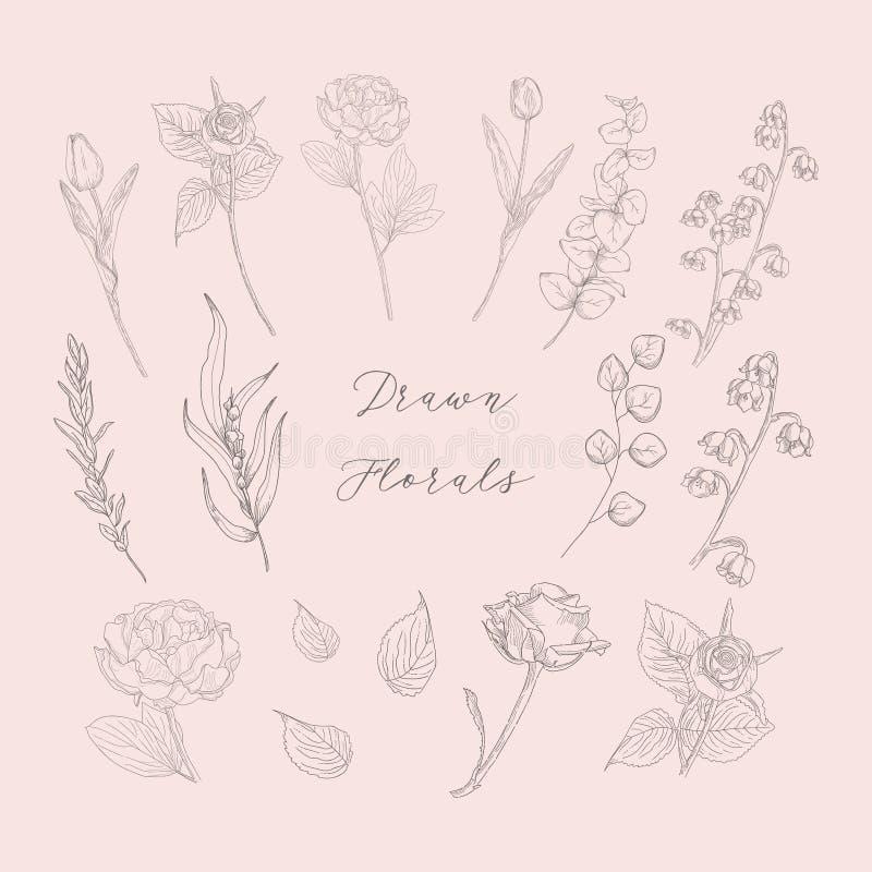 Florais tirado mão do vetor, flores, plantas, ervas ilustração royalty free