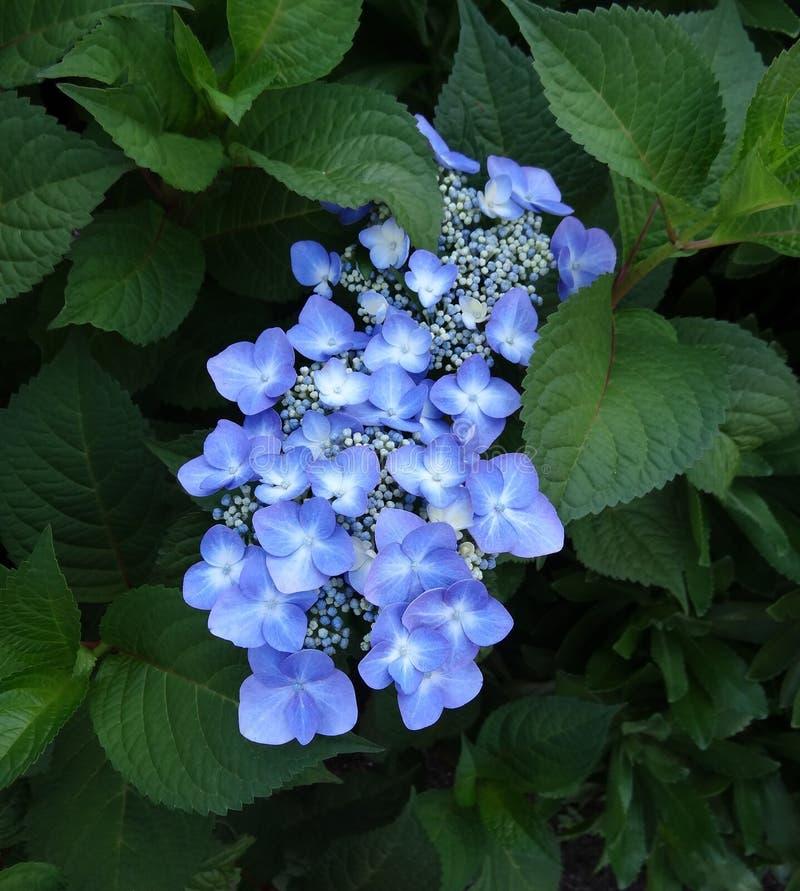 Floraison photographie stock