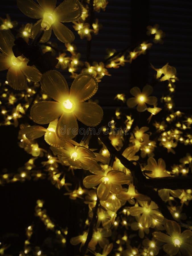 Floraison de la lumière photos stock