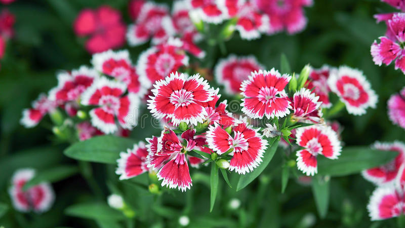 Floraison de papillon de plan rapproché photos stock
