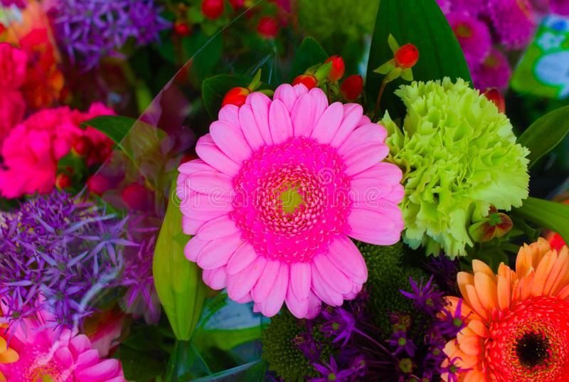 Floraison des fleurs d'intérieur image stock