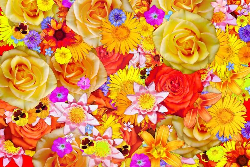 Floraison fond coloré de lotus d'abrégé sur rose et jaune fleur illustration libre de droits
