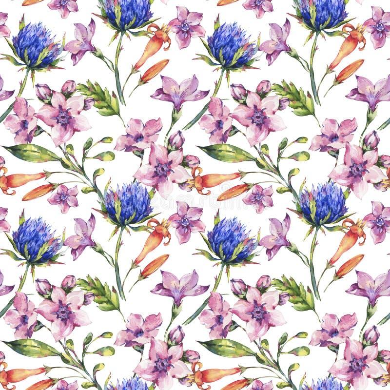Floral άνευ ραφής σχέδιο wildflowers Watercolor, κάρδοι watercolor, ρόδινα λουλούδια απεικόνιση αποθεμάτων