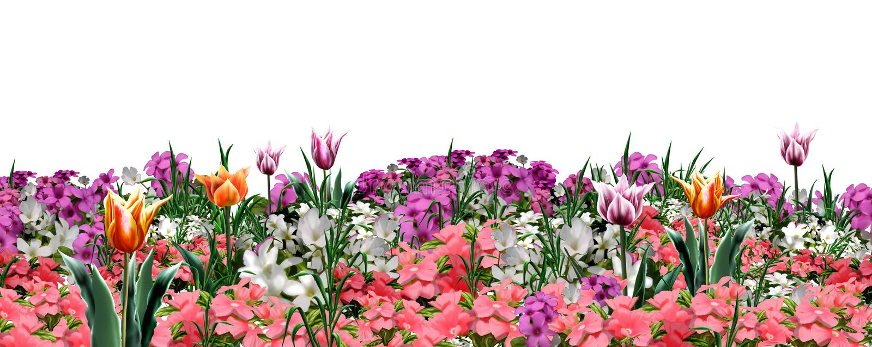 Floral έμβλημα Ιστού κήπων ελεύθερη απεικόνιση δικαιώματος