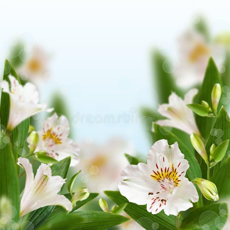 Floral ανασκόπηση. στοκ εικόνα
