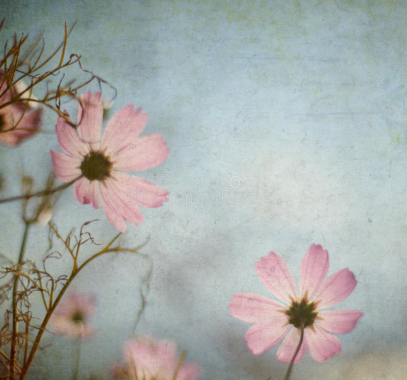 Floral ανασκόπηση Grunge με το διάστημα για το κείμενο ή την εικόνα διανυσματική απεικόνιση