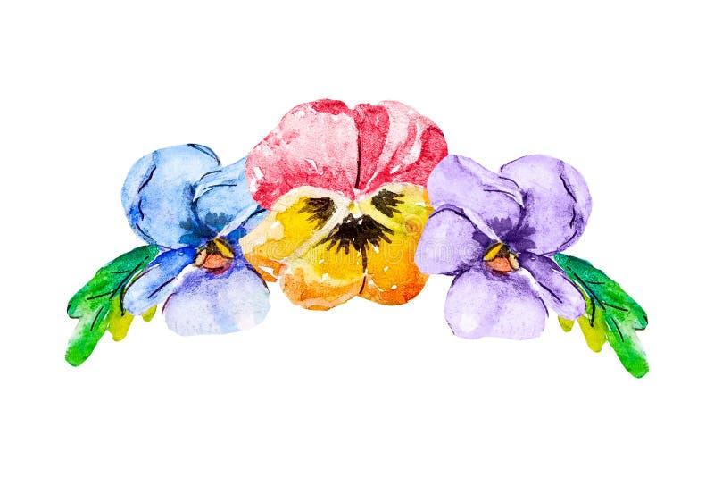 Floral ανθοδέσμη Watercolor τριών ανθίζοντας κεφαλιών του viola pansy κόκκινοι και κίτρινοι μπλε και πορφυρός semicircle σε ένα λ διανυσματική απεικόνιση