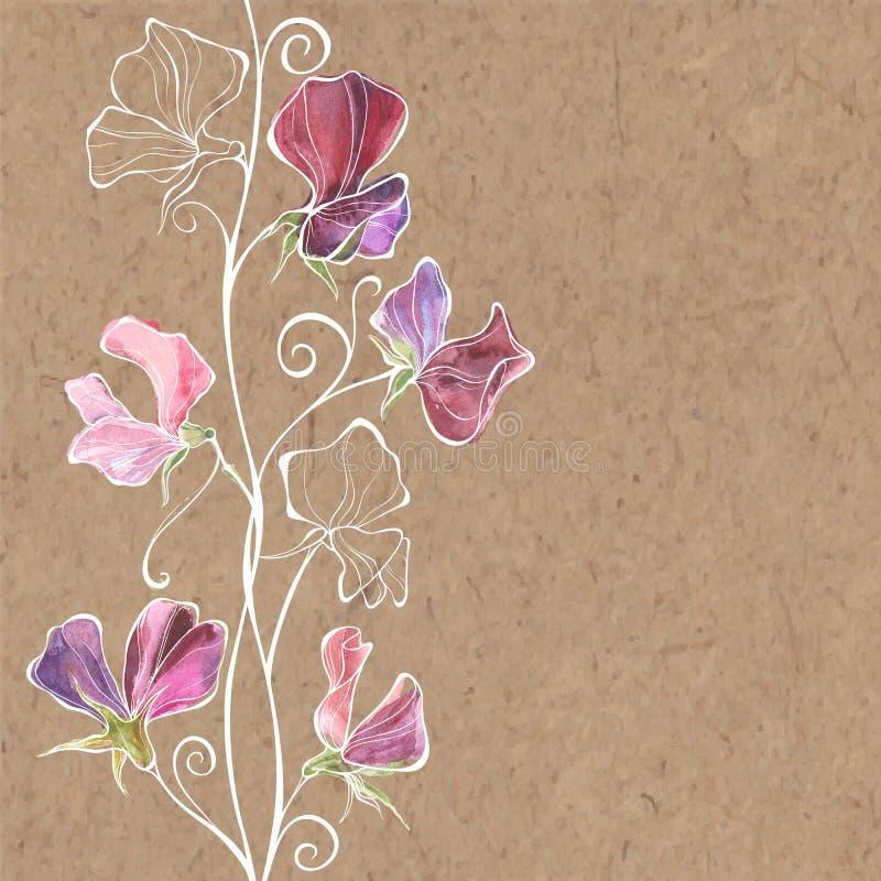 Floral απεικόνιση με το γλυκό μπιζέλι λουλουδιών και θέση για το κείμενο επάνω διανυσματική απεικόνιση