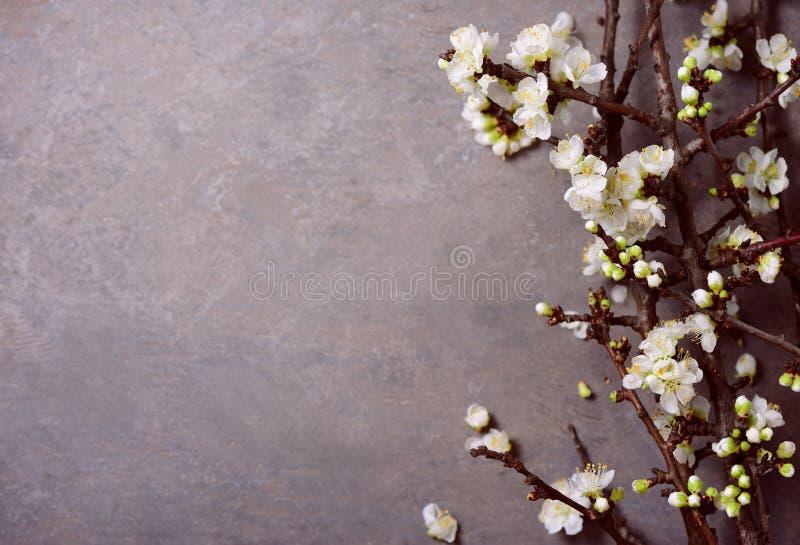 Floral ευμετάβλητο υπόβαθρο άνοιξη στοκ εικόνες με δικαίωμα ελεύθερης χρήσης