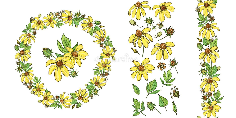 Floral θερινά στοιχεία με τις χαριτωμένες δέσμες του rudbeckia διανυσματική απεικόνιση