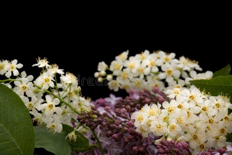Floral ιώδη και άσπρα άνθη υποβάθρου στοκ φωτογραφία με δικαίωμα ελεύθερης χρήσης