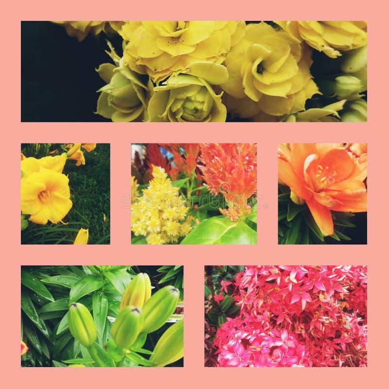 Floral κήπος στοκ εικόνες