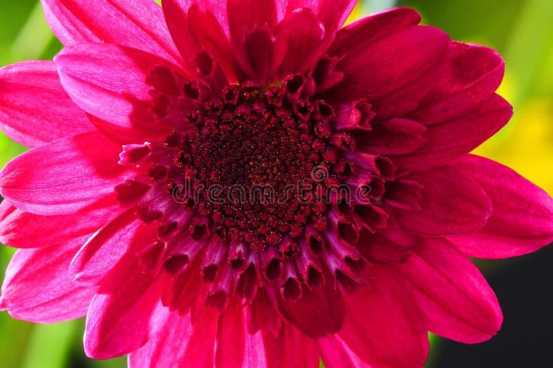 Floral μακρο ρύθμιση στοκ εικόνα