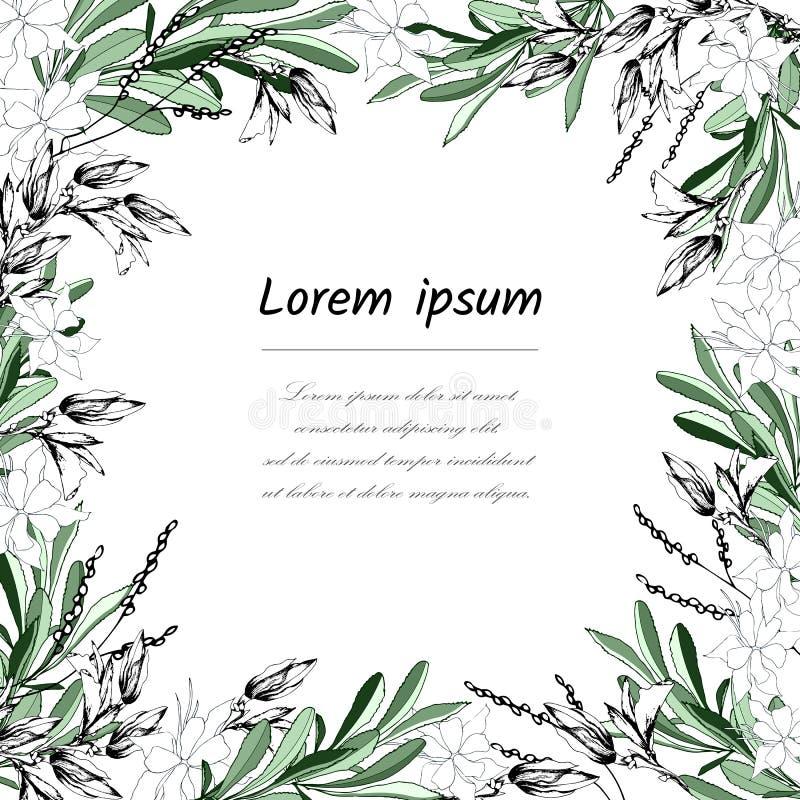 Floral πλαίσιο για το κείμενο από τα άσπρα και πράσινα φύλλα Κάρτα για τα συγχαρητήρια και τις προσκλήσεις με τα λουλούδια r απεικόνιση αποθεμάτων