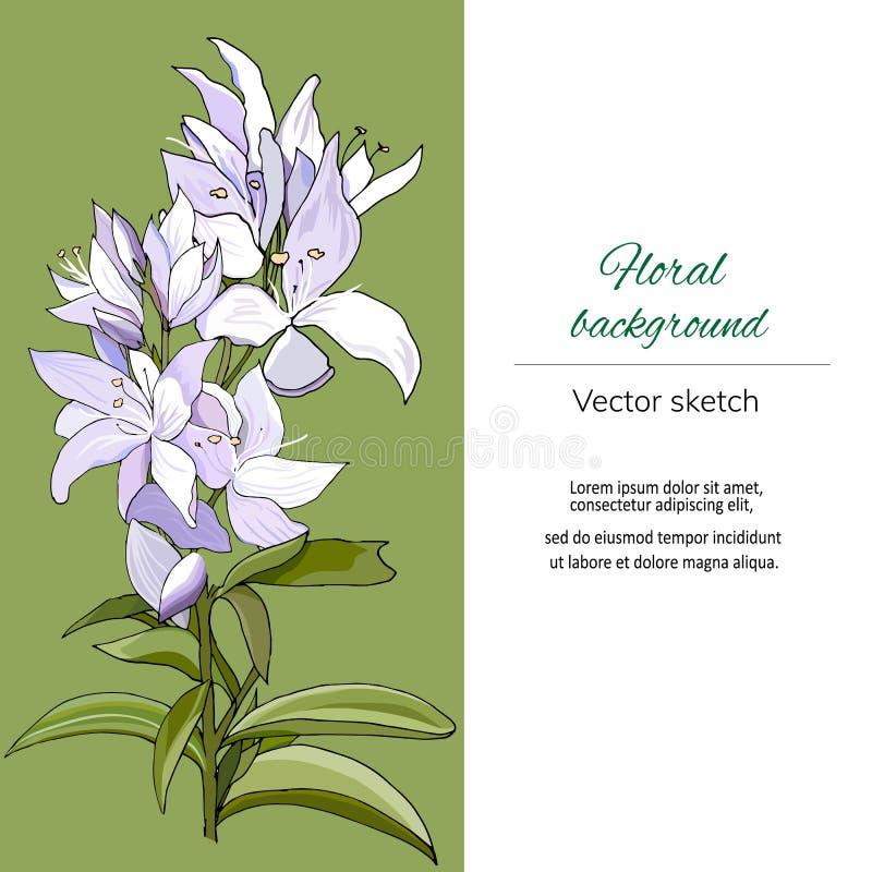 Floral πλαίσιο κειμένων για τους χαιρετισμούς και τις προσκλήσεις Ανοικτό πράσινο υπόβαθρο και ιώδη λουλούδια r ελεύθερη απεικόνιση δικαιώματος