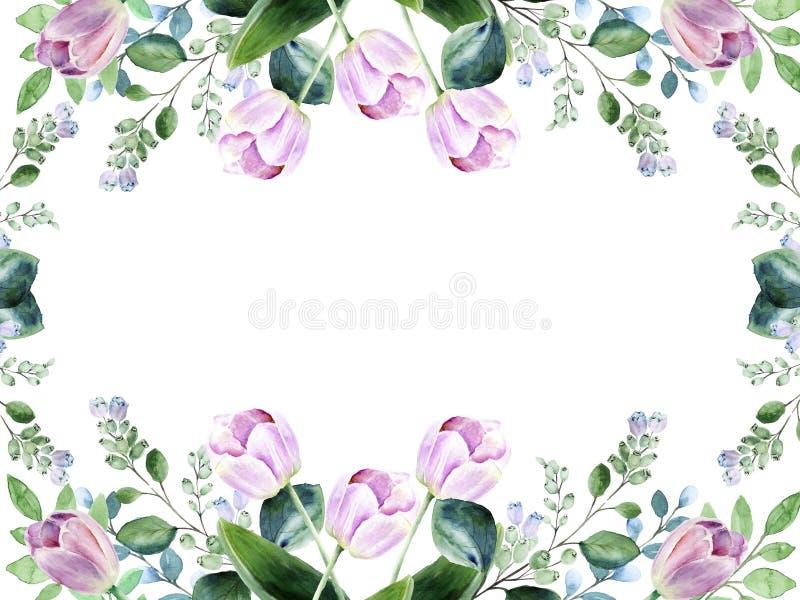 Floral πλαίσιο Watercolor με τις ρόδινες τουλίπες και άνθιση snowberry στοκ εικόνες με δικαίωμα ελεύθερης χρήσης