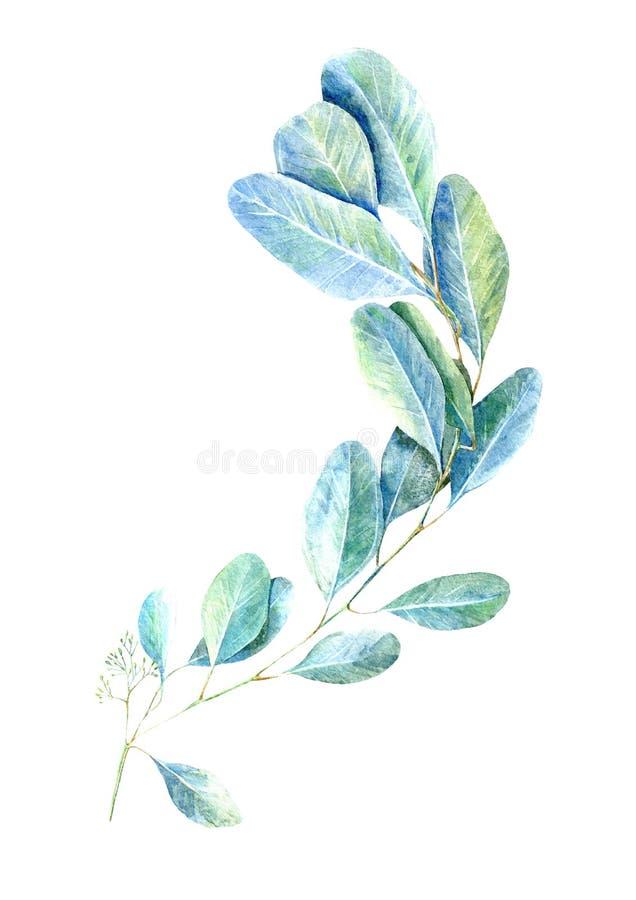 floral πρότυπο άνευ ραφής Κλάδοι ευκαλύπτων Εικόνα για το ύφασμα, κλάδοι ευκαλύπτων πράσινη floral κάρτα Συρμένο χέρι illu Waterc διανυσματική απεικόνιση