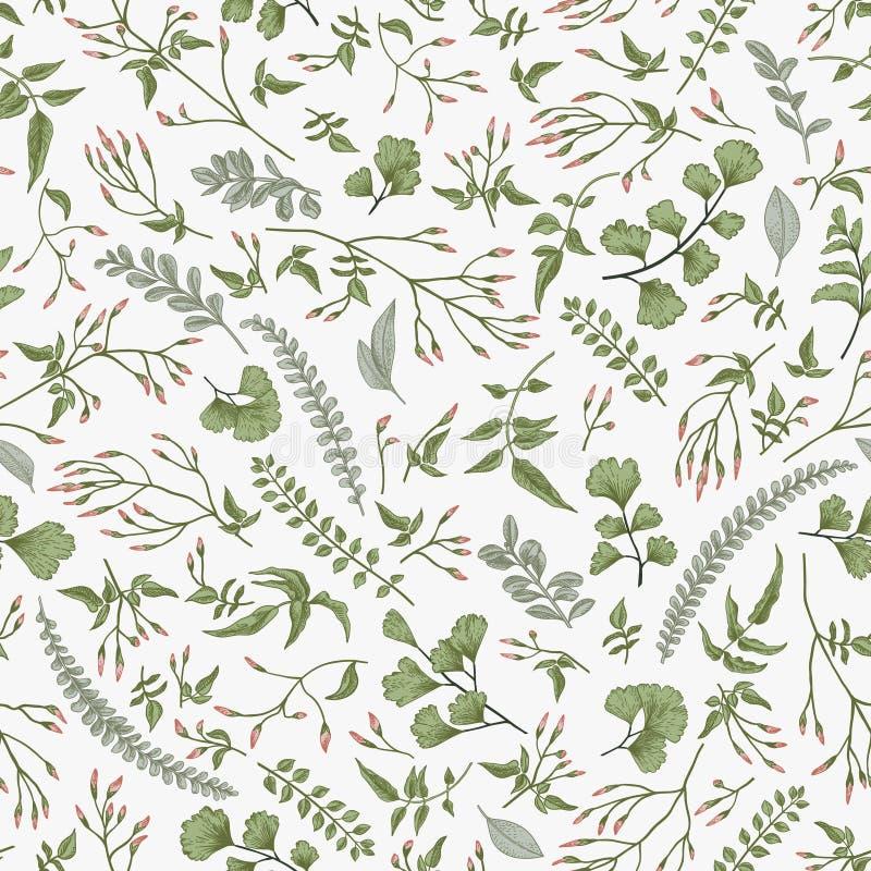 floral πρότυπο άνευ ραφής Φύλλα και χορτάρια απεικόνιση αποθεμάτων