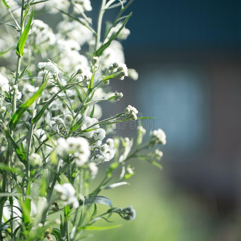 floral σας σχεδίου ανασκόπησ&et στοκ εικόνα