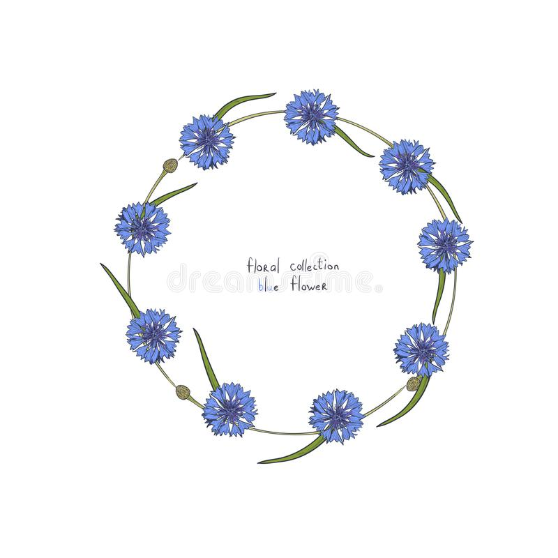 Floral στεφάνι με τα τυποποιημένα μπλε λουλούδια των cornflowers και των πράσινων φύλλων ελεύθερη απεικόνιση δικαιώματος