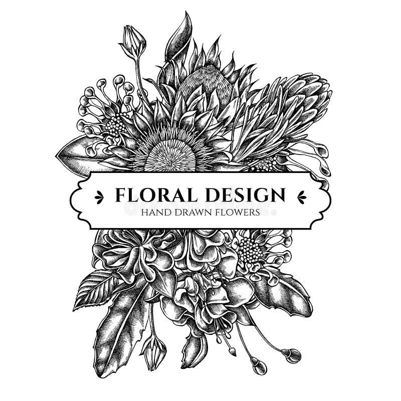 Floral σχέδιο ανθοδεσμών με τις γραπτές αφρικανικές μαργαρίτες, φούξια, protea βασιλιάδων διανυσματική απεικόνιση