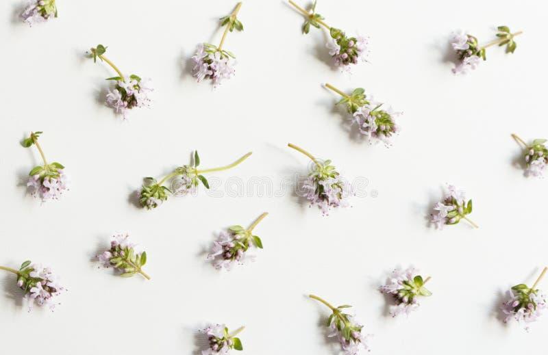 Floral, σχέδιο, βοτανική σύνθεση Ρόδινα λουλούδια θυμαριού που απομονώνονται στο άσπρο επιτραπέζιο υπόβαθρο Ορισμένη φωτογραφία α στοκ εικόνες