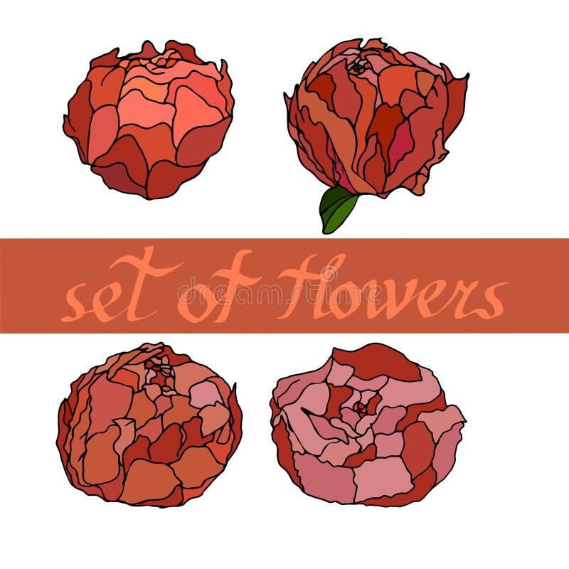 floral σχέδιο με τα peones με τα στοιχεία του σχεδίου επίσης corel σύρετε το διάνυσμα απεικόνισης στοκ εικόνες